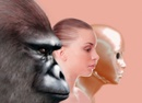 Past and future human evolution, artwork