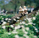 本を読む丘の妖精人形 フォトイラスト 旭川郊外 美瑛