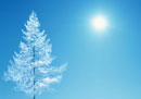 樹氷のイメージ