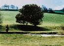 釣りをする男性と草原の木 デボン イギリス