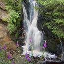 滝と紫の花