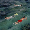 AUSTRALIA. UNESCO World Heritage Sites. The Great Barrier Reef. Snorkeling. 2004.
