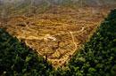 プランテーションの為に切り開かれた雨林