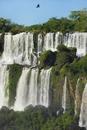 Iguazu Falls with turkey vulture in flight, Cathartes aura,