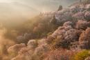 朝日射す吉野山