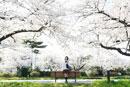 桜並木の前に立つ女子中学生