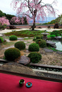 桜の正法寺庭園と抹茶と茶菓子