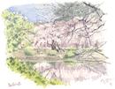 新宿御苑春
