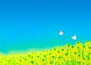 一面の菜の花畑とモンシロチョウ