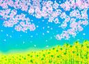 一面の菜の花畑と桜の花