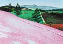 水彩画 芝桜の彩り