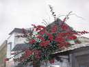 水彩画 屋根の上の花