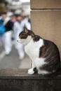 塀の上の猫と近づく人々