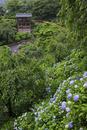 紫陽花咲く善峯寺