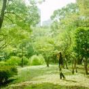 都市の中の公園と女性