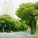 東京都庁と車道と歩道に植わった木