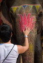 Western woman patting elephant at Amber Fort,Close Up