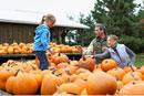 Family Choosing Pumpkin