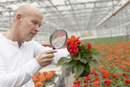 Scientist examining a flower in greenhouse