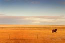 Horse in Field, Montana, USA
