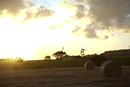 Round hay bales at sunset