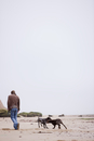 Back view of a man walking dogs on a beach