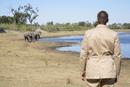 Africa, Botswana, Okavango Delta, Man watching African Elephants (Loxodonta africana) at a waterhole, rear view