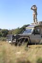 Africa, Botswana, Okavango Delta, Man on safari using binoculars