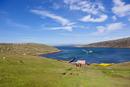 South Atlantic, United Kingdom, British Overseas Territories, West Falkland, Falkland Islands, Falklands, New Island, Tourists a