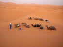 North Africa, Morocco, Merzouga, Tuareg guide with camels at Erg Chebbi desert