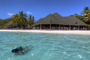 Asia, Maldives, Young woman swimming on Paradise Island
