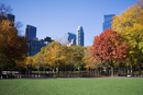Trees in a park with buildings in the background, Central Park, Manhattan, New York City, New York State, USA