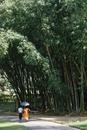 Buddhist monk beneath tall bamboo, Peradeniya Gardens, Kandy, Sri Lanka, Asia