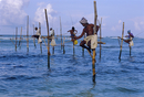 Stilt fishermen at Welligama, south coast, Sri Lanka, Indian Ocean, Asia