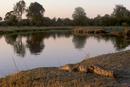 Crocodile resting on bank of Kwai River in Moremi Game Reserve, Okavango Delta, Botswana, Africa