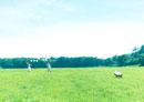風船を持って駆ける2人の女性と犬