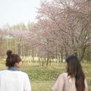 桜に向かって歩く2人の女性の後姿