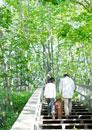 森林の木道を歩くシニア夫婦と犬の後姿
