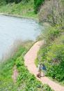 湖を散歩するシニア夫婦と犬