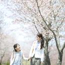 桜並木道で手をつなぐ親子
