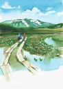 水芭蕉のある風景 水彩
