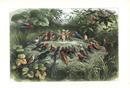 Elf and choir of birds