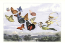 Fairy queen riding butterfly carriage