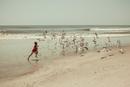 Boys running on beach with gulls