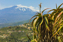 Agave succulent plant and active volcano 3350m Mount Etna seen at this northeast tourist town, Taormina, Catania Province, Sicil