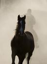Cowboy driving a horse at Sombrero Ranch, Craig, Colorado