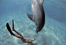 Snorkeler interacting with wild Bottlenose Dolphin (Tursiops