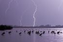 鳥の集まる湖と落雷