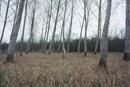 Nude amongst trees