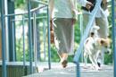 犬を散歩させる夫婦